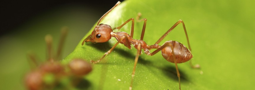 Can Leaders Learn From Ants Scott Breslin